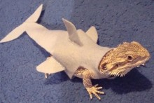 DIY-Lizard-Shark-Costume