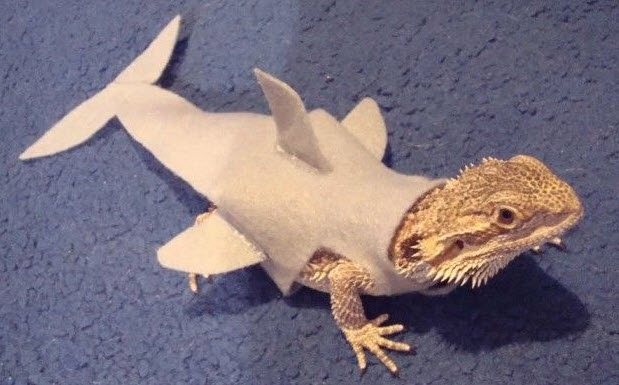 & DIY Lizard Shark Costume - petdiys.com