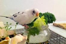 DIY-Stay-Fresh-Veggie-Bowl