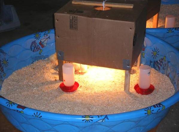Kiddie Pool Chick Brooder Petdiys Com