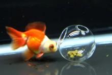 Plastic-Ball-Treat-Dispenser