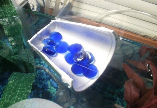 styrofoam cup betta log   petdiys    rh   petdiys
