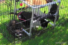 Dog-Cage-Catio