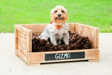 DIY-Wood-Dog-Box-Bed