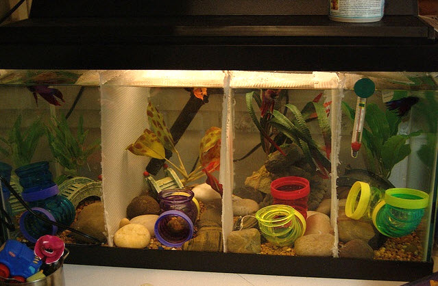Hamster tube fish cave for Fish tank for hamster