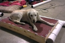 DIY-Air-Cooling-Dog-Bed