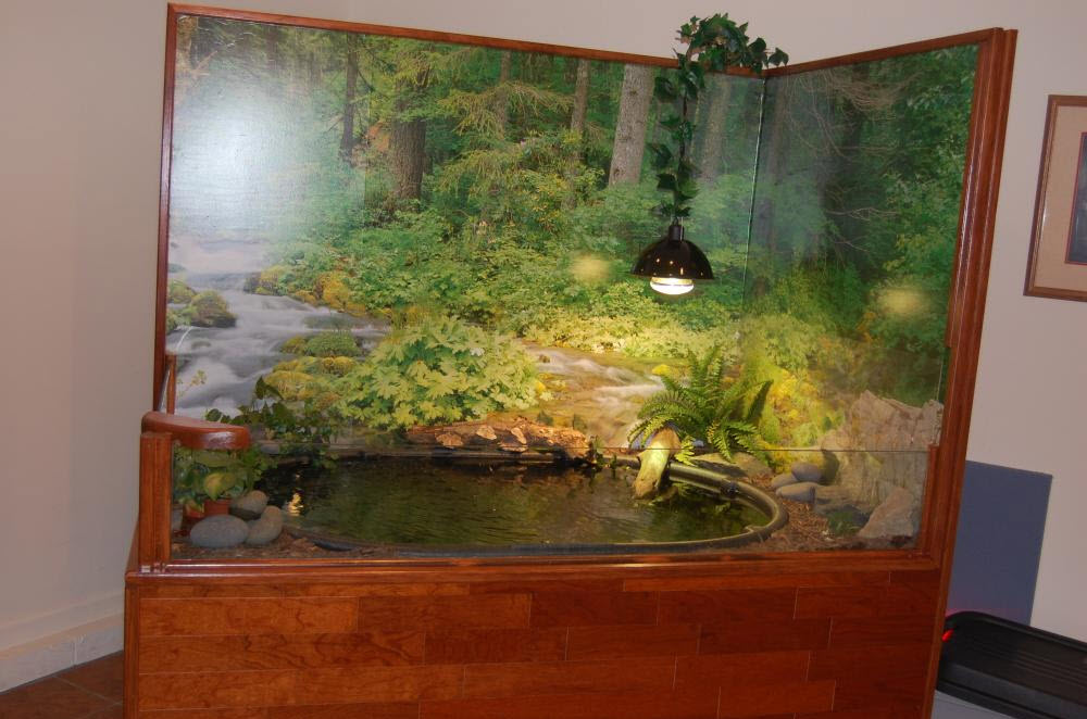 Diy corner mural turtle pond Diy indoor turtle pond