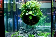 DIY-Floating-Foliage-Ball