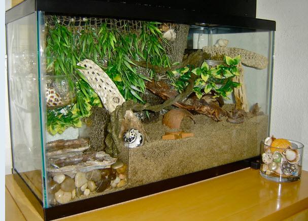Diy Plexiglas Tank Divider Petdiys Com