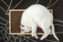 DIY-Wood-Floor-Scratcher