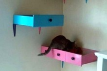 Drawer-Cat-Shelf