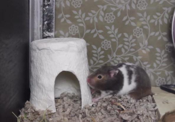 Toilet Paper Hamster Hut Petdiys Com