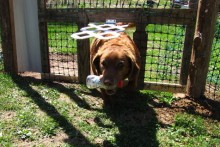 DIY-Fence-Dog-Door