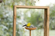 DIY-Framed-Bird-Feeder