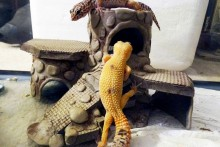 DIY-Multi-Level-Lizard-House