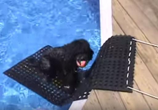 Diy Rubber Mat Pool Ramp Petdiys Com