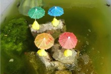 DIY-Tadpole-Nursery