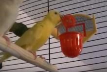 DIY-Bird-Basketball-Training