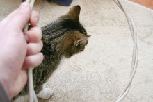 DIY-Cat-Hoop-Jump-Training