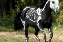 DIY-Horse-Skeleton-Costume