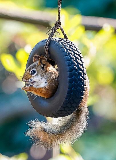 DIY Squirrel Tire Swing Feeder