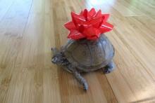 Present-Bow-Tortoise-Marker