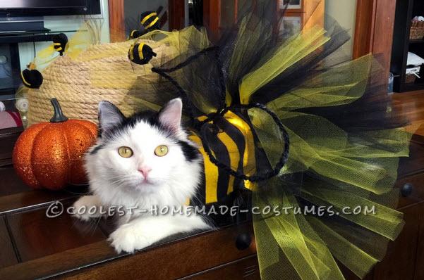 Diy Cat Bee Costume Petdiys Com
