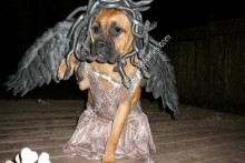 DIY-Dog-Medusa-Costume