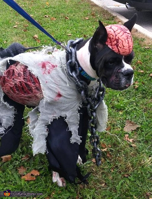 Zombie Dog Costume by LaskaWolf on DeviantArt |Diy Zombie Dog Costumes