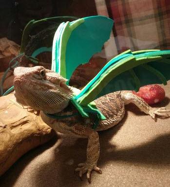 DIY Dragon Wings Harness - petdiys.com