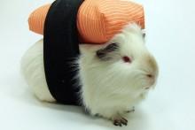 DIY-Guinea-Pig-Sushi-Costume