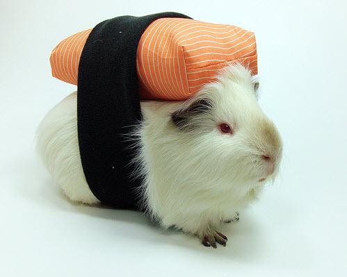 Diy guinea pig sushi costume for Diy guinea pig things