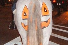 DIY-Horse-Pumpkin-Costume