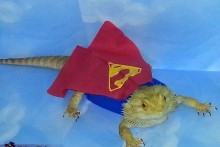DIY-Superman-Lizard-Costume