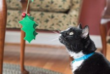 DIY-Christmas-Holly-Cat-Wand