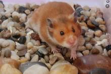DIY-Hamster-Rock-Garden