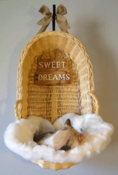 Bassinet Cat Wall Bed Petdiys Com