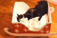 DIY-Box-Cat-Sleigh