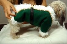 DIY-Dog-Elf-Coat