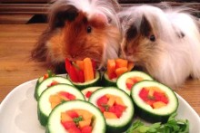 DIY-Guinea-Pig-Sushi