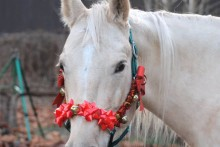 DIY-Horse-Christmas-Bow-Halter