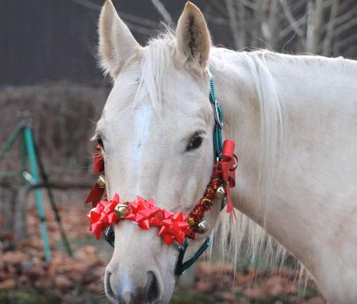 Christmas Horse Tack.Diy Horse Christmas Bow Halter Petdiys Com