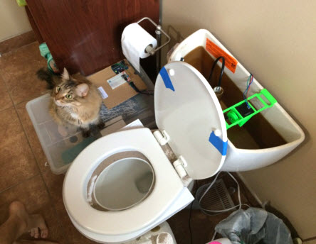 Diy Automatic Cat Toilet Flusher Petdiys Com