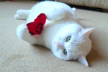 DIY-Catnip-Heart-Cat-Toy