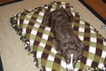 DIY-Fringe-Dog-Bed