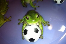 DIY-Frog-Soccer-Ball