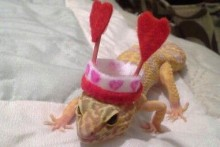DIY-Heart-Antenna-Lizard-Hat