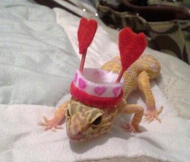 DIY-Heart-Antenna-Lizard-Hat.jpg