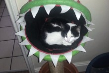 DIY-Mario-Plant-Cat-Bed