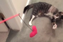 Cats archives for Diy cat wand